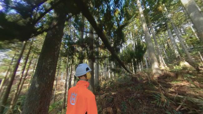 林業安全教育用のVR制作し研修に活用 アルファコードが開発