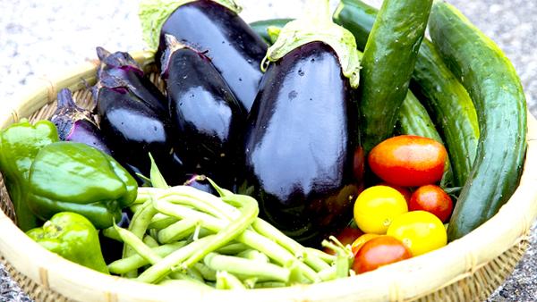きゅうり、なす、ピーマンなど8月前半は高値推移 野菜の生育状況及び価格見通し