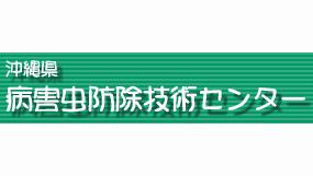 パパイヤ黒腐病を確認 感染源の適切な処分を 沖縄県病害虫防除技術センター