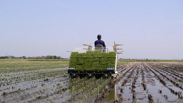 耕地利用率 91.4%-令和元年統計 農水省