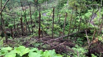 2016年8月に北海道に上陸した台風による森林倒壊