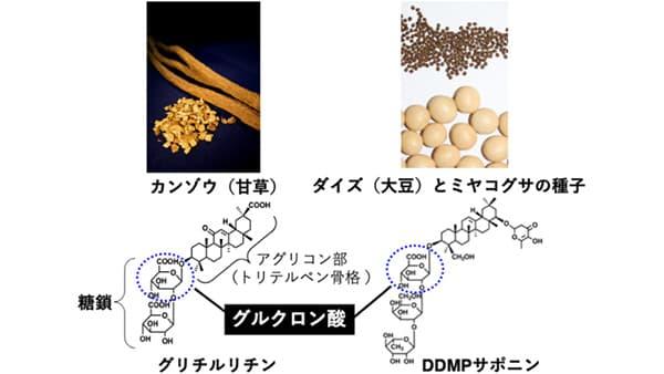 甘味成分の酵母生産に成功 農研機構、大阪大学教授らのグループが解明