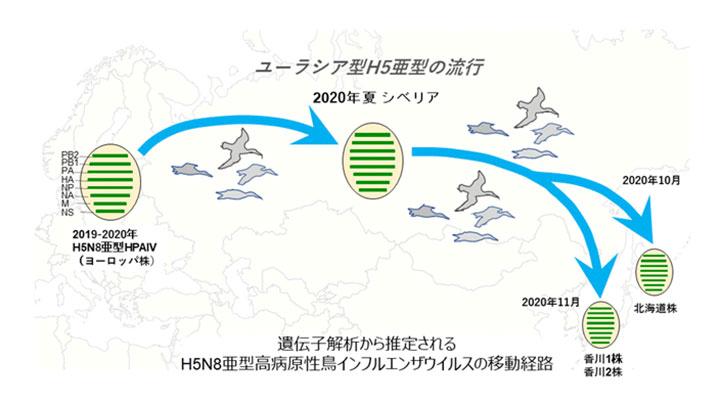 香川の鳥インフルエンザ 欧州から-農研機構