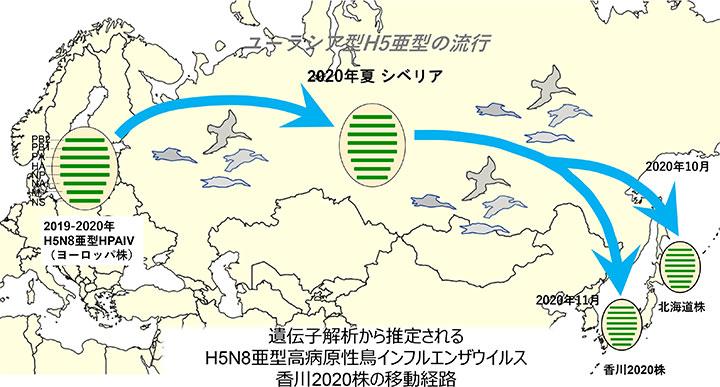 遺伝⼦解析から推定される H5N8亜型⾼病原性⿃インフルエンザウイルス ⾹川2020株の移動経路