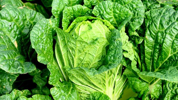 はくさい、キャベツなど安値傾向 1月の野菜の生育状況と価格見通し 農水省