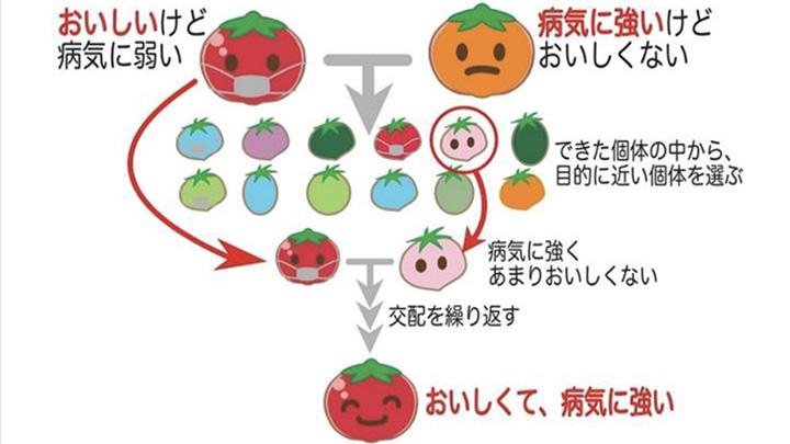 【ゲノム編集技術を知る】新しい育種技術? そもそも育種って?