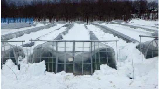 ハウスの早期再建など大雪被害に支援策決定-農水省