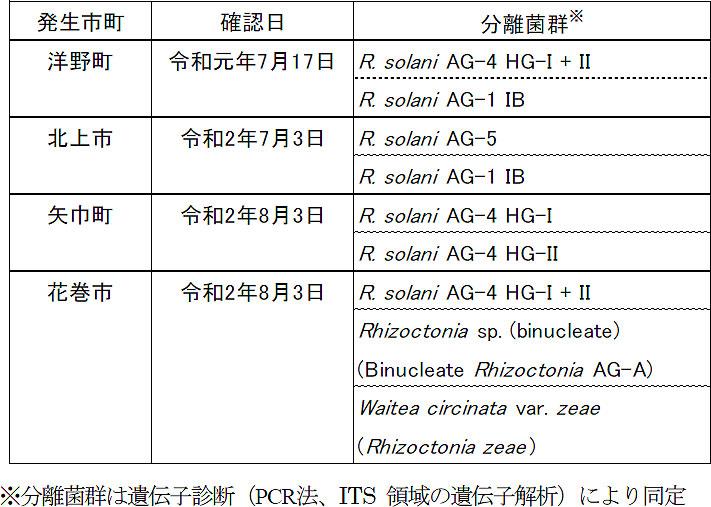 岩手県内で確認されたネギリゾクトニア葉鞘腐敗病の分離菌群