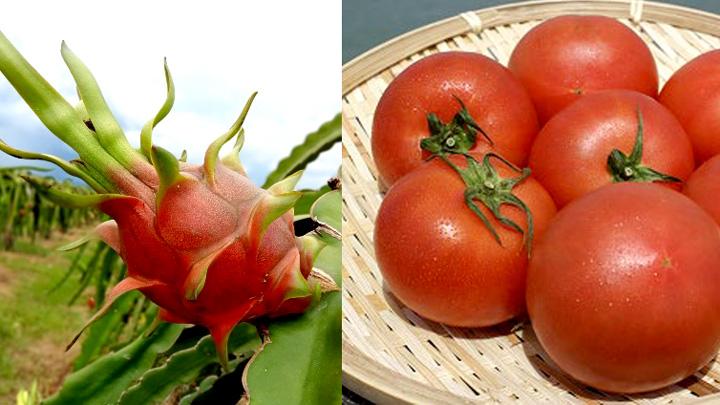 ビントゥアンドラゴンフルーツ(左)、くまもと塩トマト
