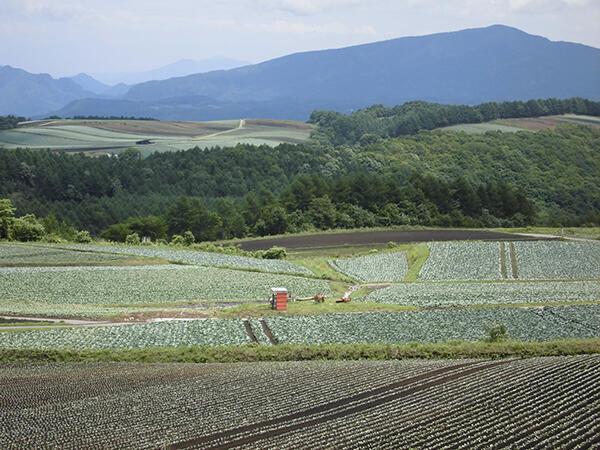 労働力不足が深刻な野菜産地(群馬・嬬恋村で)