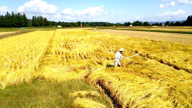 【本紙独自調査】米需給調整 主産地が焦点 200JA米担当者の声【中四国 九州】