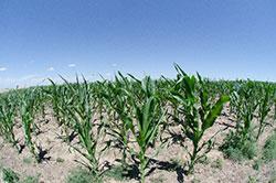 アグロ多国籍企業の統合ー巨大化する世界の農薬企業