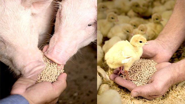 家畜の効率的な成長に寄与・優れた安定性のフィターゼ製品