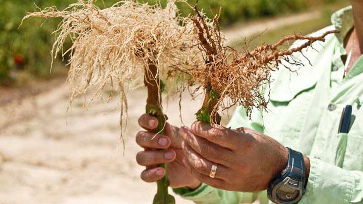 世界の殺線虫剤市場 2027年までに3.5%以上の成長率と予想