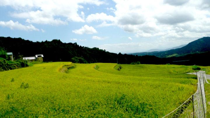 土づくり特集・肥料取締法を改正 地力の回復へ2