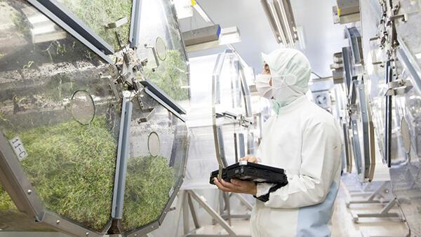 ブロッコリー スーパースプラウトを生産する植物工場