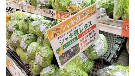 「今朝採れ」「シャキ直」新鮮レタスを340店舗で販売 イオンリテール