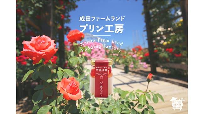 バラの花香るオリジナルプリンを季節限定で販売 成田ファームランド