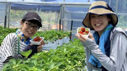 関西で珍しい夏イチゴを摘み取り体験 六甲山の体験農園