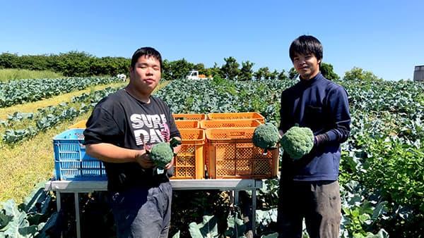 ブロッコリー栽培を学ぶ若手農業者