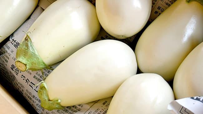 見た目でも涼を感じる白さが魅力の茅ケ崎産のトルコナス