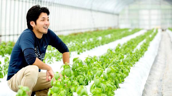 フレッシュハーブを生産する兵庫県・淡路島の生産者 フレッシュグループ代表の森靖一さん