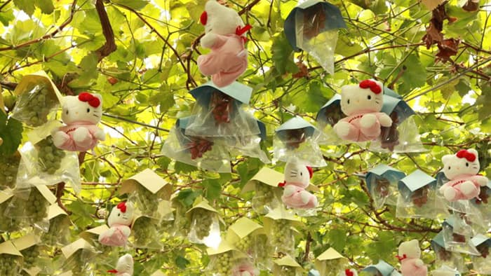 ぶどうとともにハローキティがなるぶどうの樹