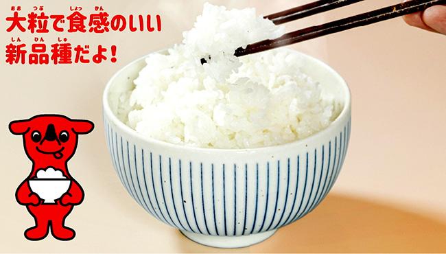 千葉県の新品種「粒すけ」デビューキャンペーン」開始