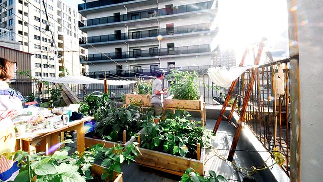 「食」と「農」で街づくり「アーバンファーミング」を学ぶイベント開催 神戸市