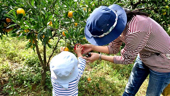 スタッフに教わりながら収穫体験