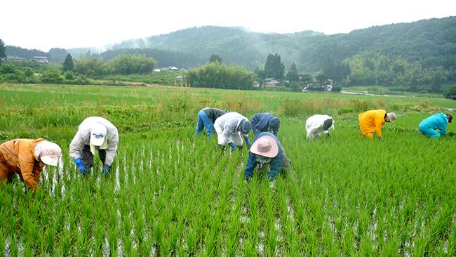 組合員による除草の手伝いの様子