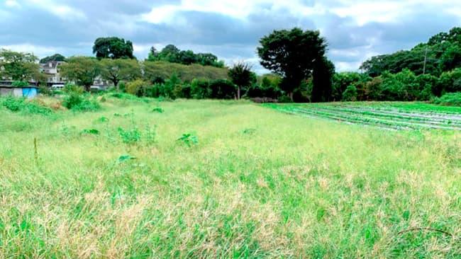しょうがのむしが借りた休耕地(農園予定地)