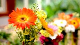 花のサブスク(定額サービス)体験モニター募集 ブランド総合研究所