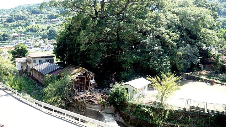 台風10号の被害を受けた「天一の森」