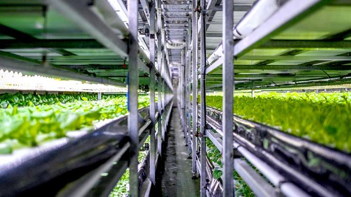 垂直農法作物市場 将来の開発、メーカー、トレンドなど予測レポート追加