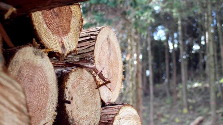 「佐賀で暮らす。佐賀で働く。」林業編 オンラインで開催 佐賀市