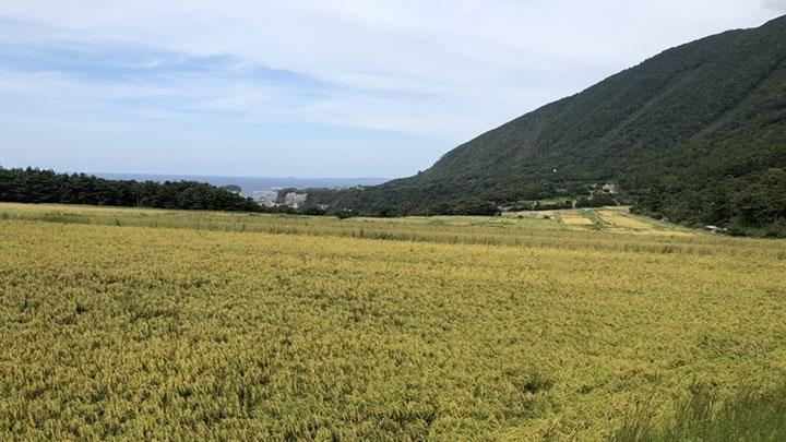 使用するお米は福井県永平寺町と南菅生町の中山間地で栽培