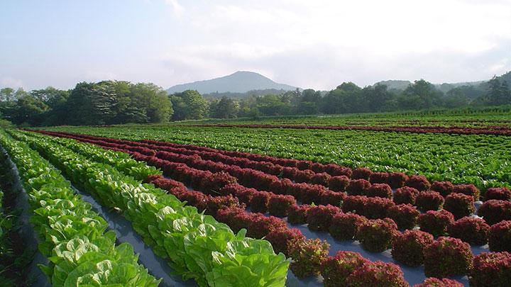 有機農業に取り組むワタミファーム
