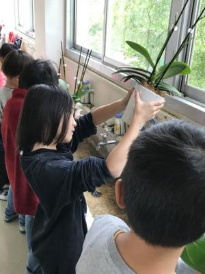 学校で胡蝶蘭を咲かせよう 心を育てる花育プロジェクト開始 椎名洋ラン園