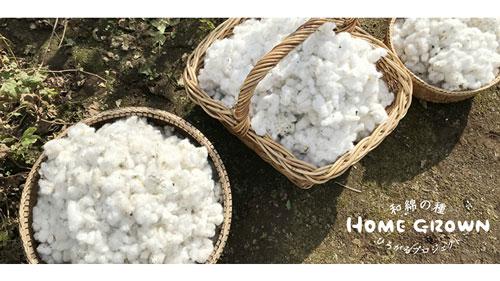 国産在来種の栽培呼びかける「和綿の種 ひろがるプロジェクト」開始
