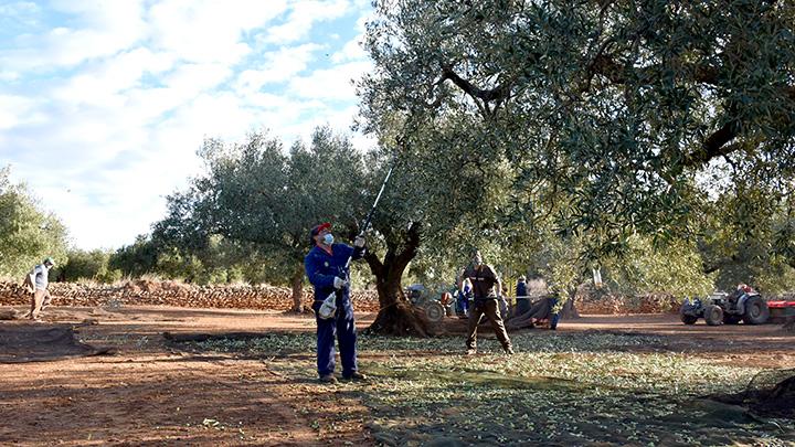 スペインのトルトサ農園