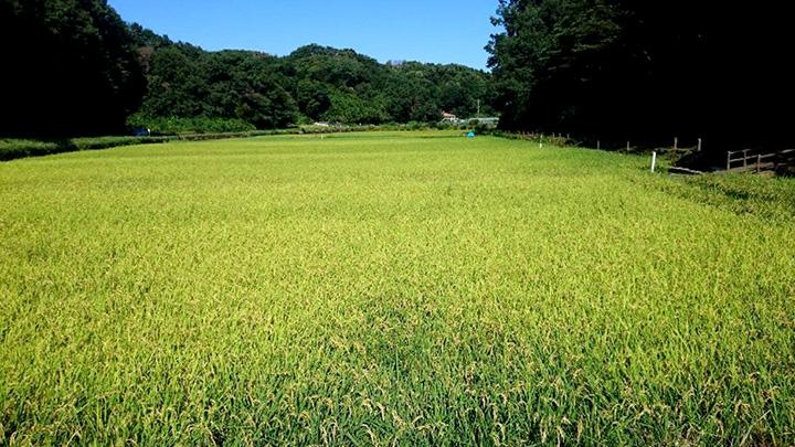 実証実験を行うっ横浜市の「寺家ふるさと村」