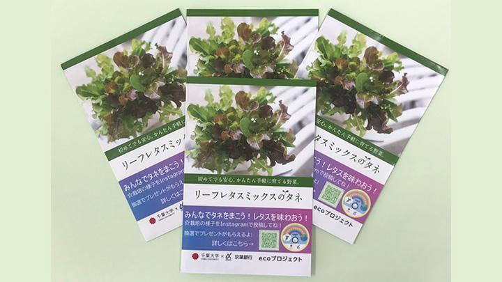 配布するリーフレタスの種
