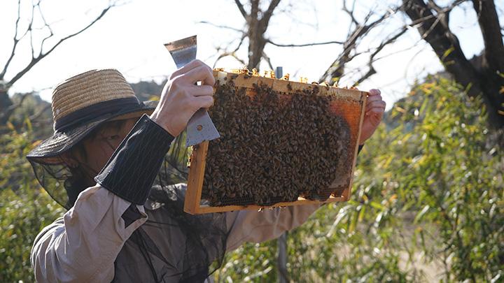 耕作放棄地で取り組んでいる養蜂事業