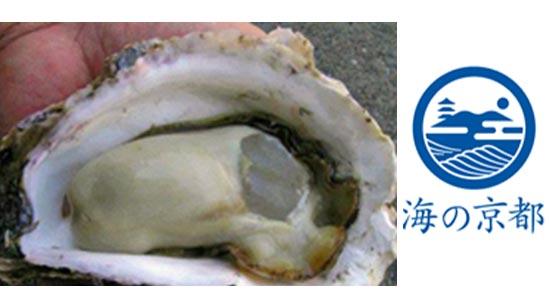 「海の京都」の初夏の味覚を先取り「丹後の海 育成岩がき」出荷開始