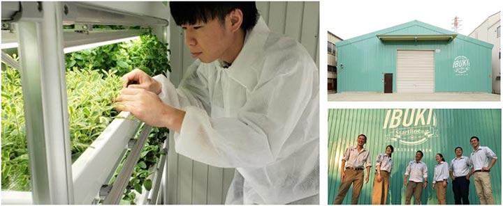 屋内農園型障がい者雇用支援サービス「IBUKI」横浜市で3拠点目を開設