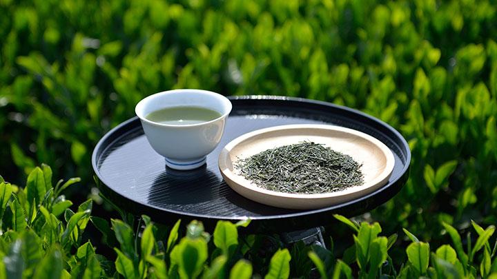 狭山茶の新茶を楽しむ「八十八夜新茶まつり」開催 埼玉県入間市