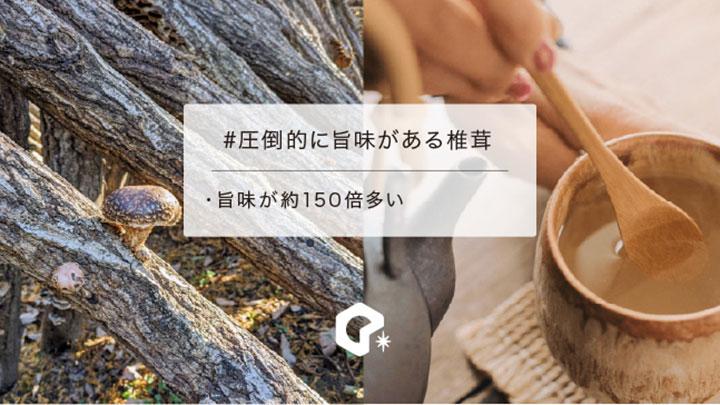 無農薬の伝統農法で育てた原木椎茸を成分分析 旨味は約150倍 椎茸祭