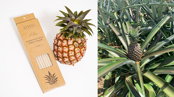 収穫後の葉を利用「パイナップル葉繊維ストロー」発売 フードリボン
