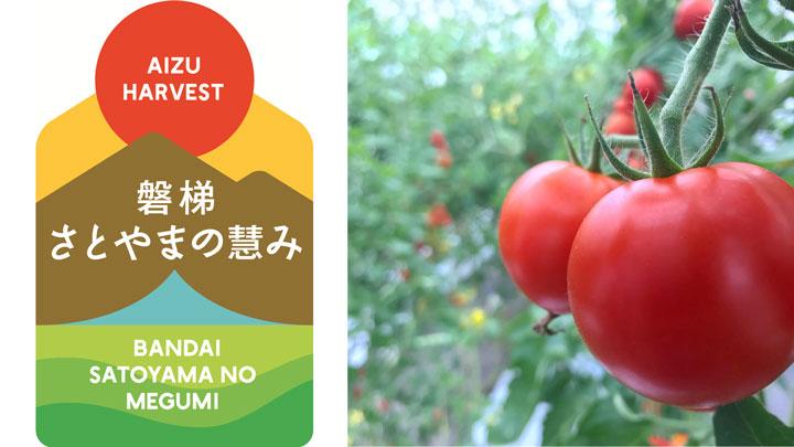 「磐梯さとやまの慧み」のブランド事業で生産されているトマト